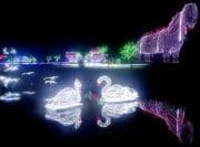 태안 빛축제장