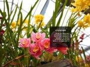 오키드타운 식물원